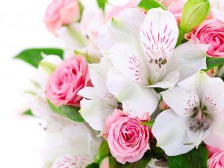 Какие цветы дарить на 8 марта?