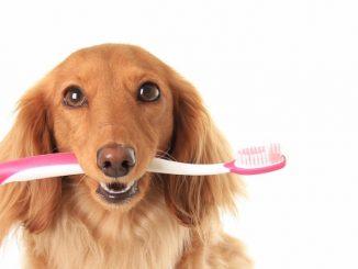 Важно ли чистить зубы собаке