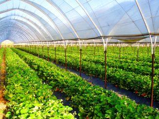 Тепличный аграрный бизнес – будущее страны